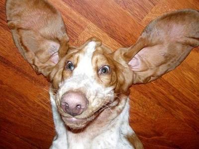 upsidedog2